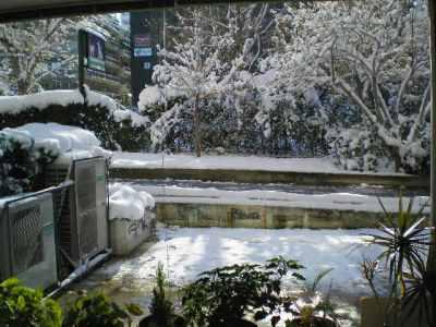 Κοιτάζοντας τα χιόνια από την αίθουσα αναμονής του Κτηνιατρικού Κέντρου Ιλισίων