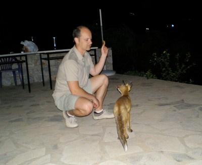 Αλεπουδάκι στον Κότρωνα, κτήμα Μπεάκου