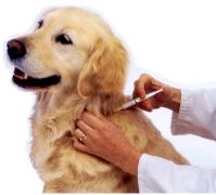 Εμβολιασμός σκύλου: Κτηνιατρικό Κέντρο Ιλισίων