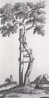 Δέντρο προσδεδεμένο σε ράβδο  για να αναπτυχθεί ίσια ο κορμός του.  L' orthopédie, Nicolas Andry.  Το σύμβολο αυτό του δέντρου με τη ράβδο  χρησιμοποιείται συχνά ως έμβλημα  από ορθοπεδικές εταιρείες και οργανισμούς.