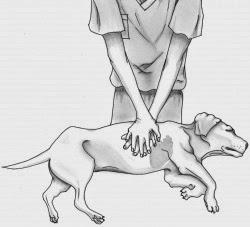 Καρδιοαναπνευστική αναζωογόνηση σε σκύλο
