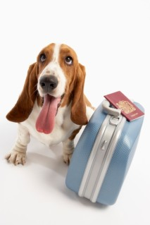Σκύλος με βαλίτσα και διαβατήριο